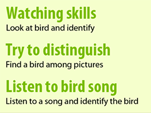 bird-quiz-way-to-get-familiar-with-vietnamese-birds