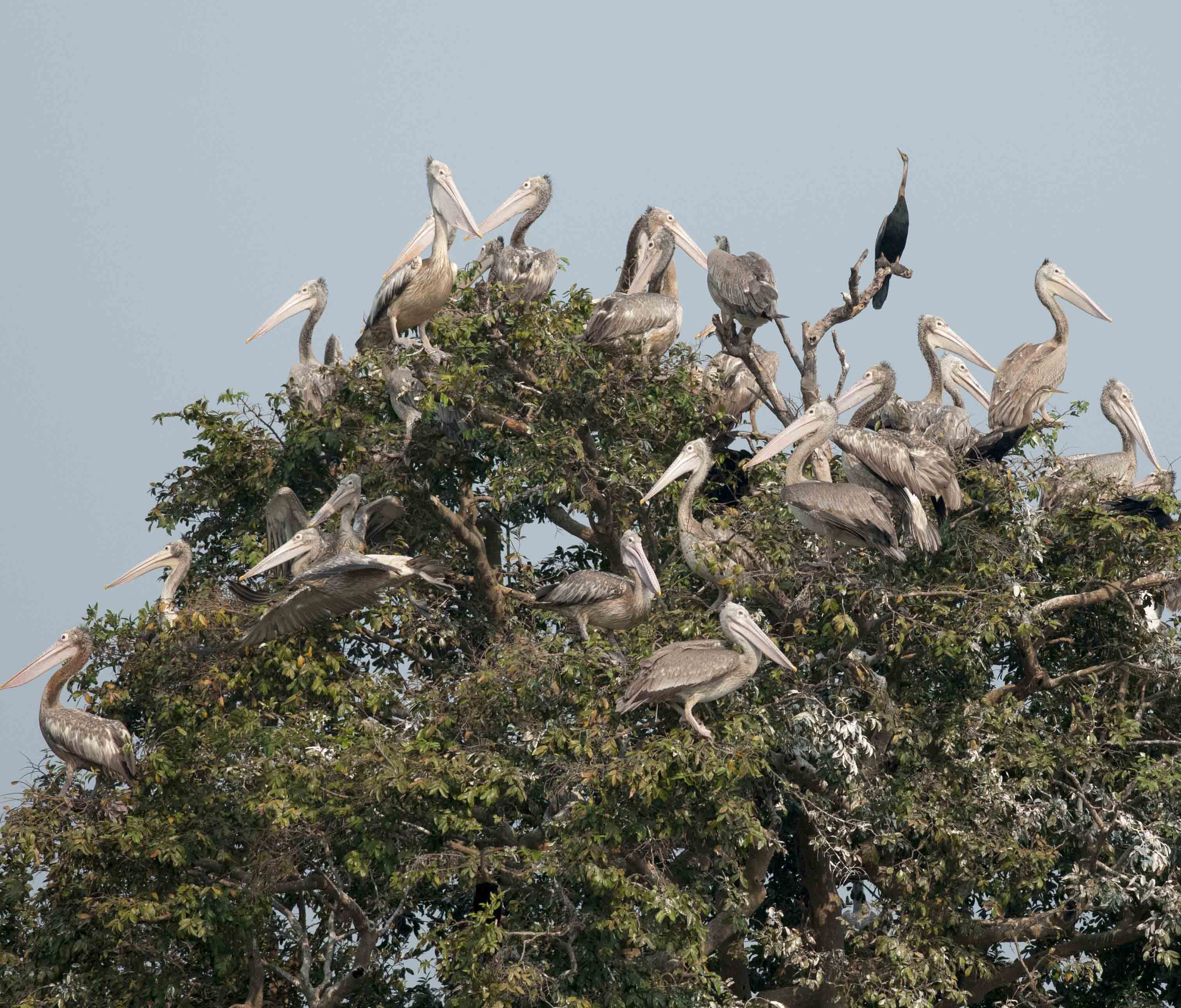 birding-bird-photography-cultures-in-the-southern-vietnam-and-cambodia