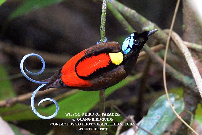 West Papua for Bird of Paradise