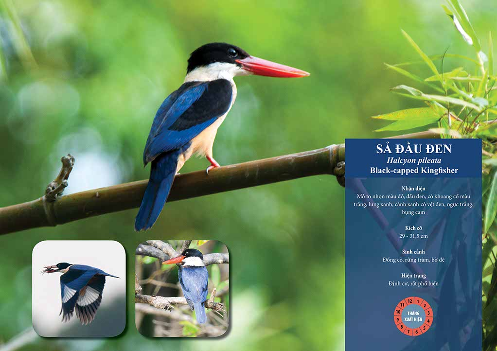 birds-of-tram-chim-national-park-and-mekong-delta