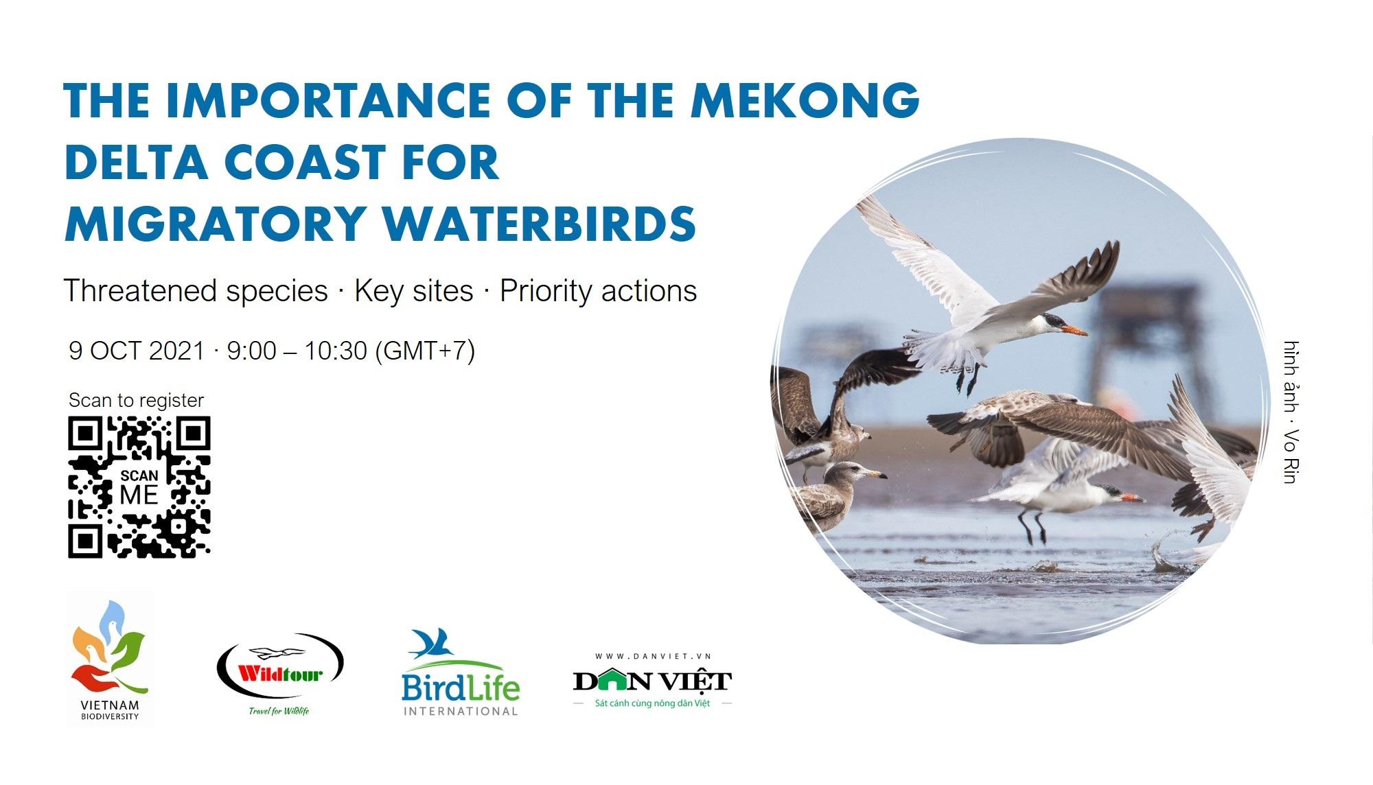 webinar-conservation-shorebirds-in-vietnam